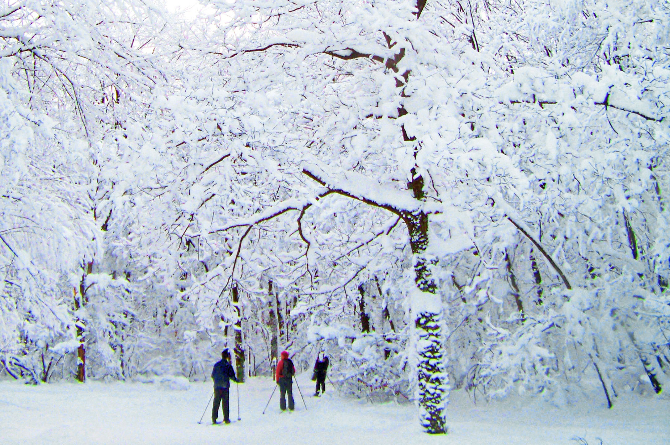 Three people cross country skiing in a snow covered landscape