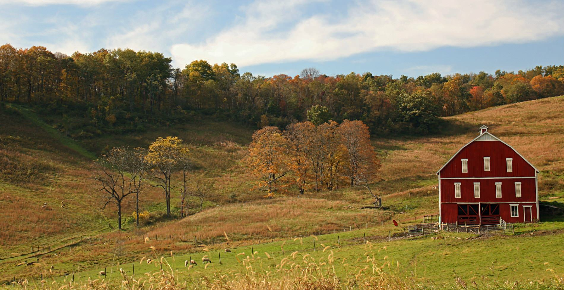 A rolling autumn landscape with a tall red barn in the field, a thick colorful forest in the backdrop.