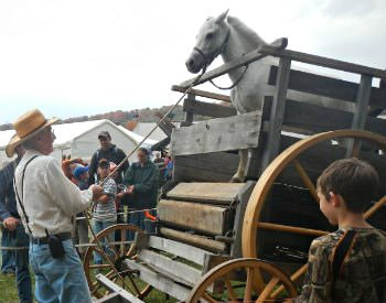 An event at Springs Folk Festival, a man holding a lead rope to a white horse in a gated wagon.